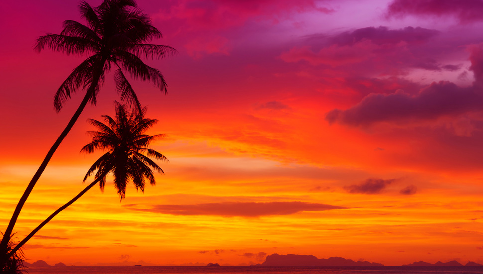 Beautiful Red Sky, Palm Trees, Landscape, Ocean, Nature, - Sunset Palm Tree Landscape - HD Wallpaper