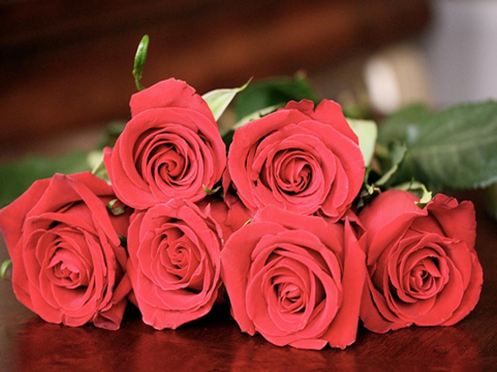 Rose Wallpapers Hd, Rose Images, Rose ...