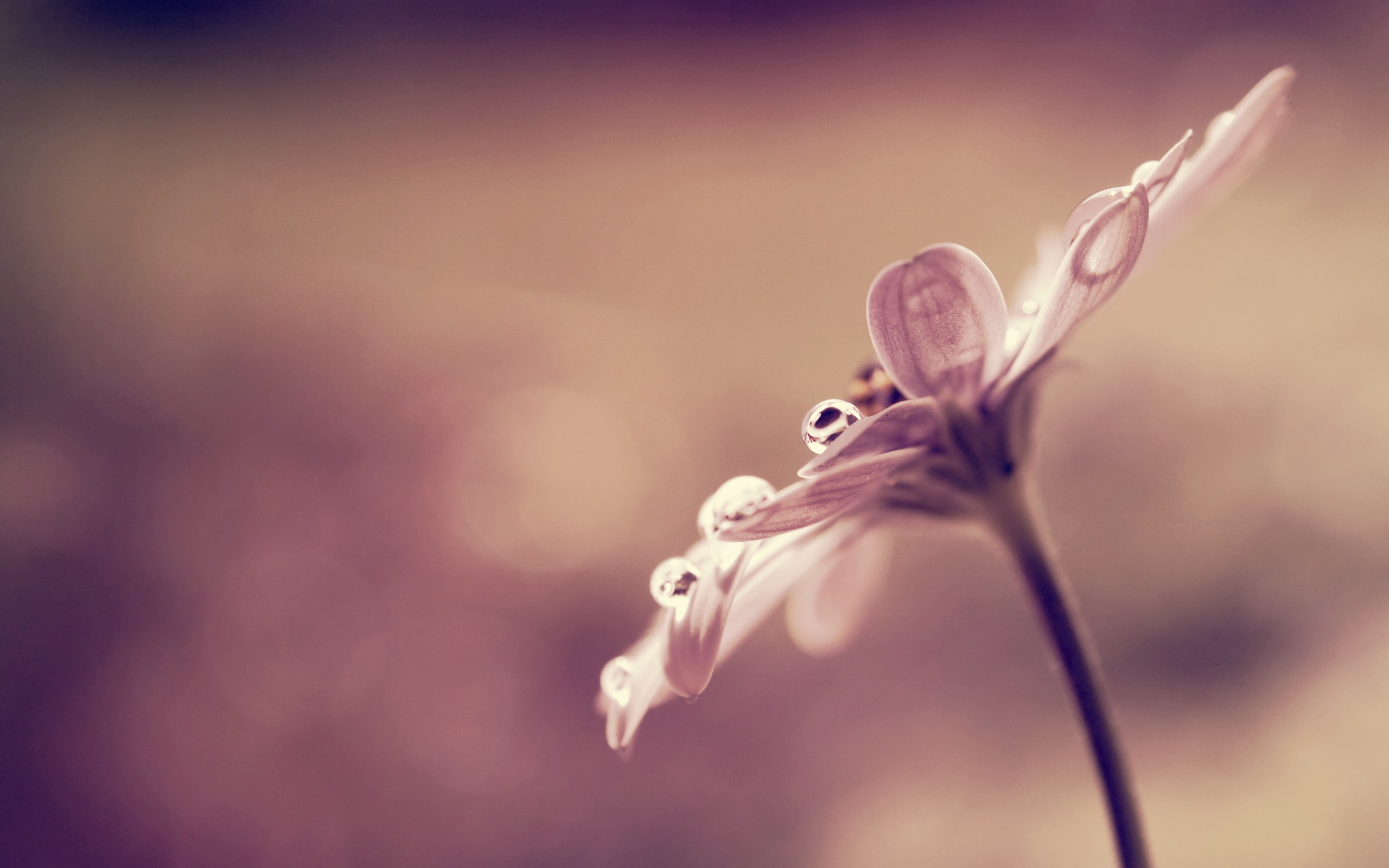 Dew Drops Flowers Hd - HD Wallpaper