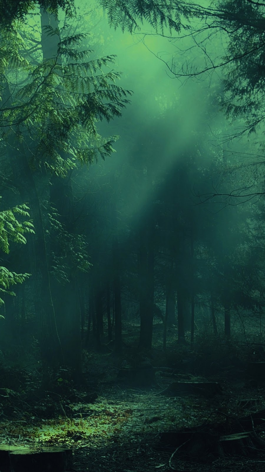 Misty Forest Wallpaper Iphone ...