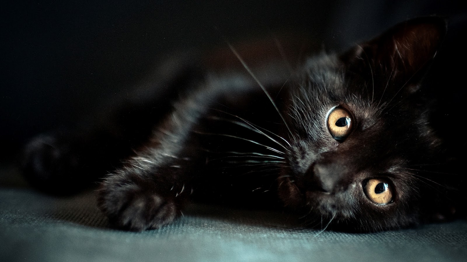 Images Of Cute Baby Cats Wallpaper Backgrounds Of Black Cats 1600x900 Wallpaper Teahub Io