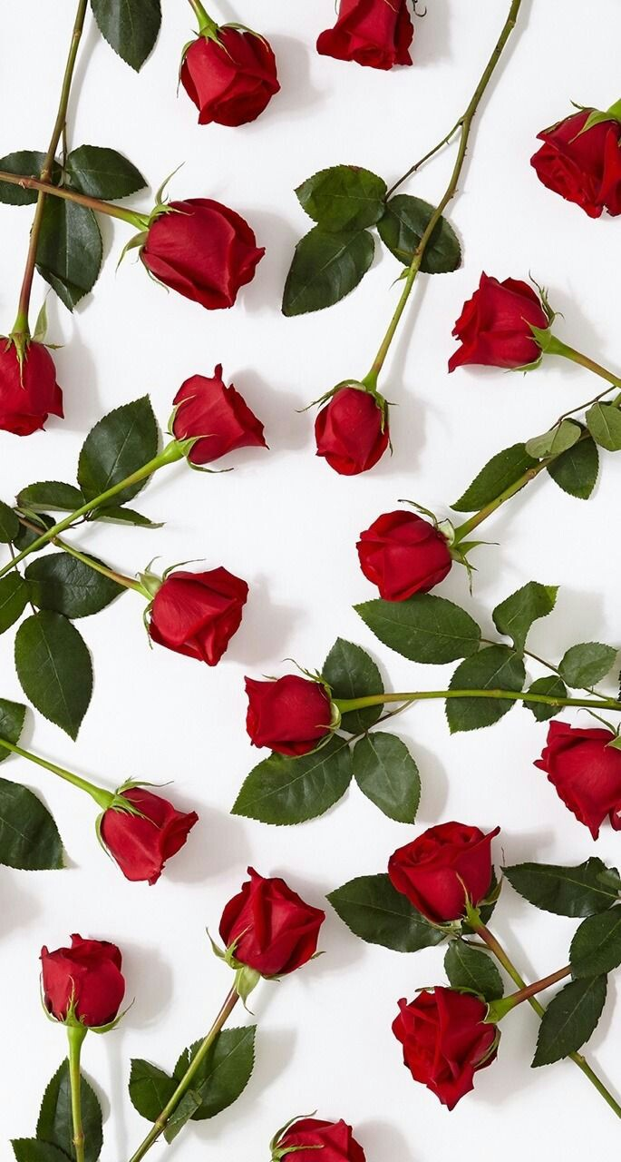 Rose Wallpaper And Red Image Cover Highlight Instagram Red 685x1280 Wallpaper Teahub Io
