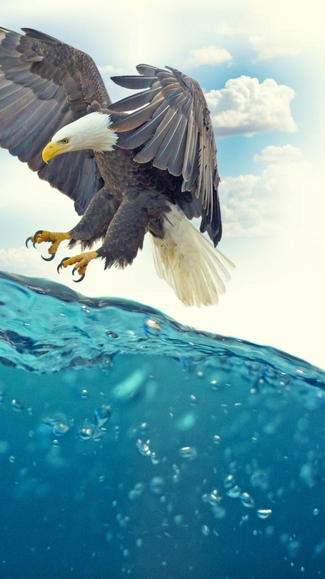 Fish Eagle Underwater 4k Fish Eagle Under Water 640x1138 Wallpaper Teahub Io