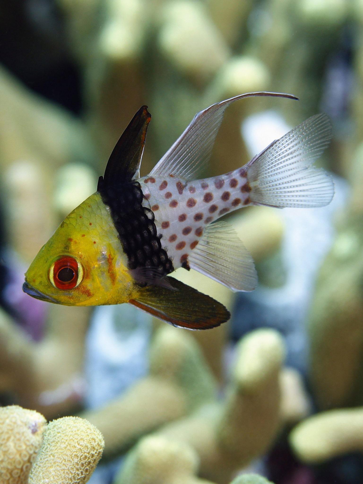 Fresh Water Fish Wallpaper - Coral Reef Fish - HD Wallpaper
