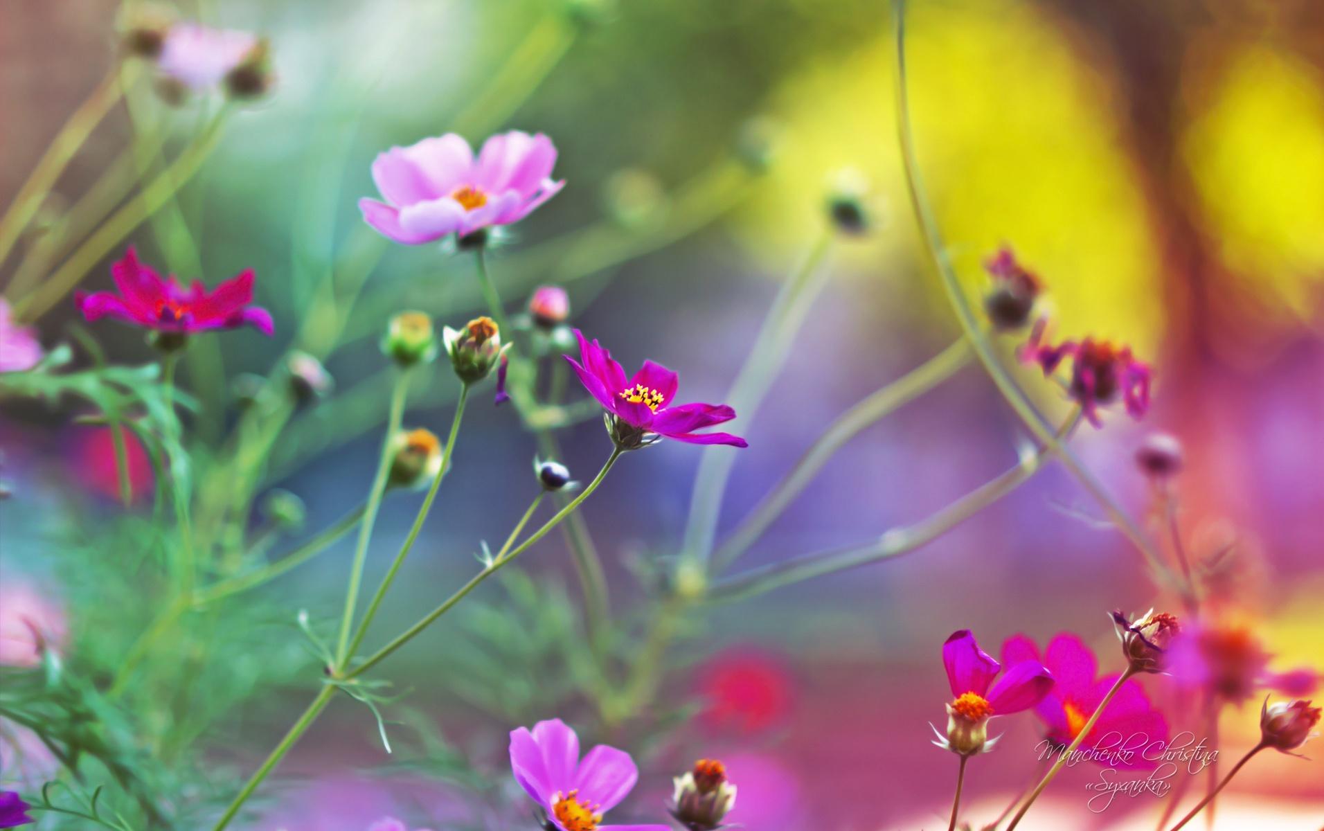 23+ 3D Hd Wallpaper Flower JPG