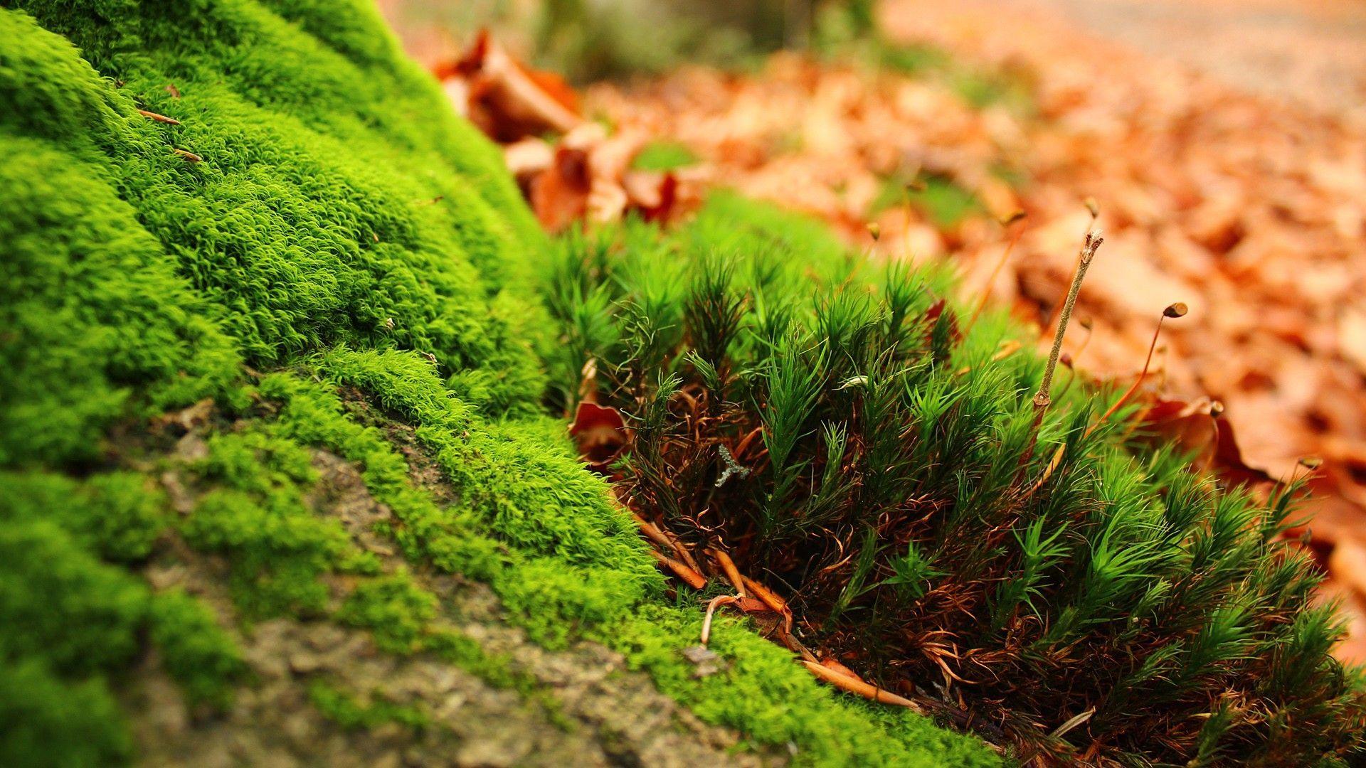 Greenish Need Iphone 6s Plus Wallpaper Background - Nature Ultra Hd Wallpapers 8k - HD Wallpaper