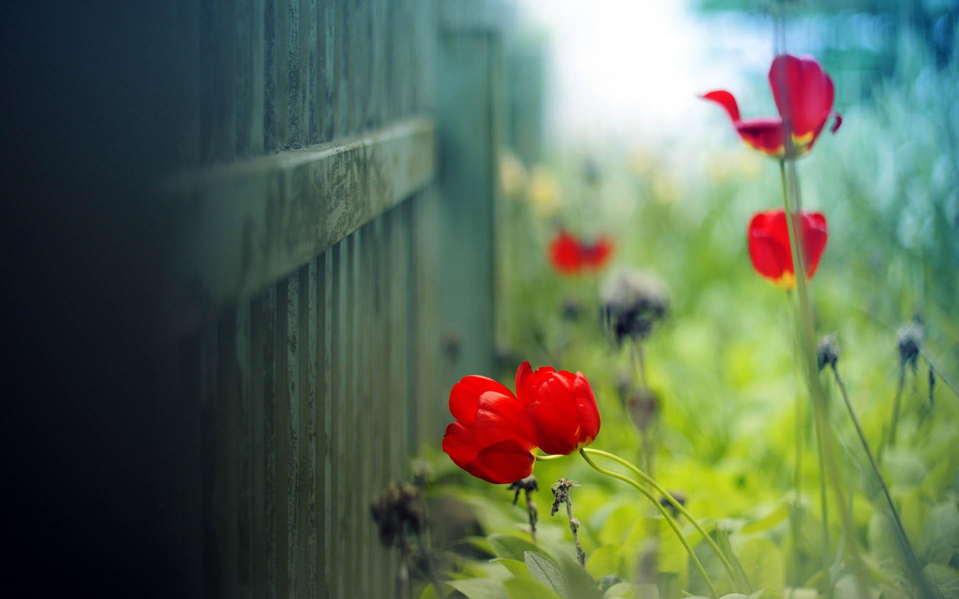 160 1603933 high resolution flower desktop background