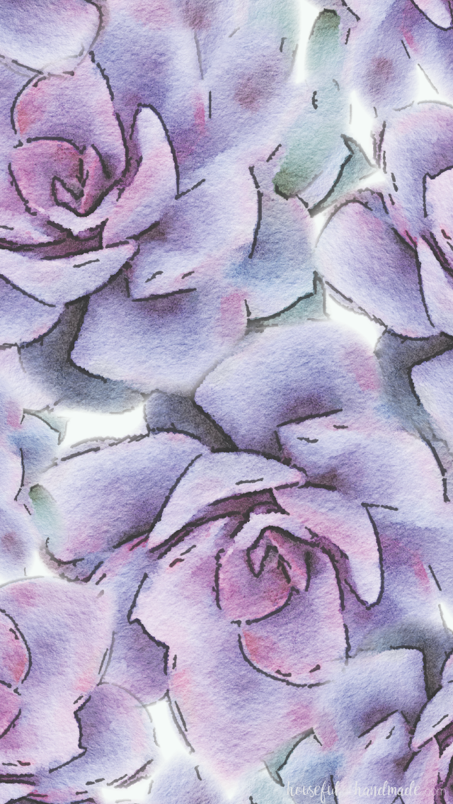 Succulent Iphone Wallpaper 640x1135 Wallpaper Teahub Io