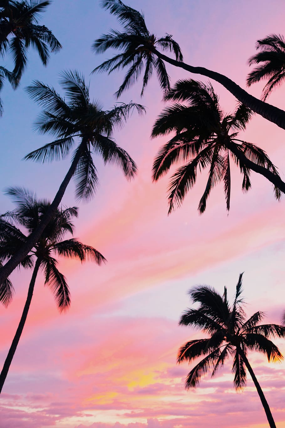 Sky, Pink, Sunset, Hawaii, Tropical, Palm Tree, Tropical - Palm Tree Iphone Background - HD Wallpaper