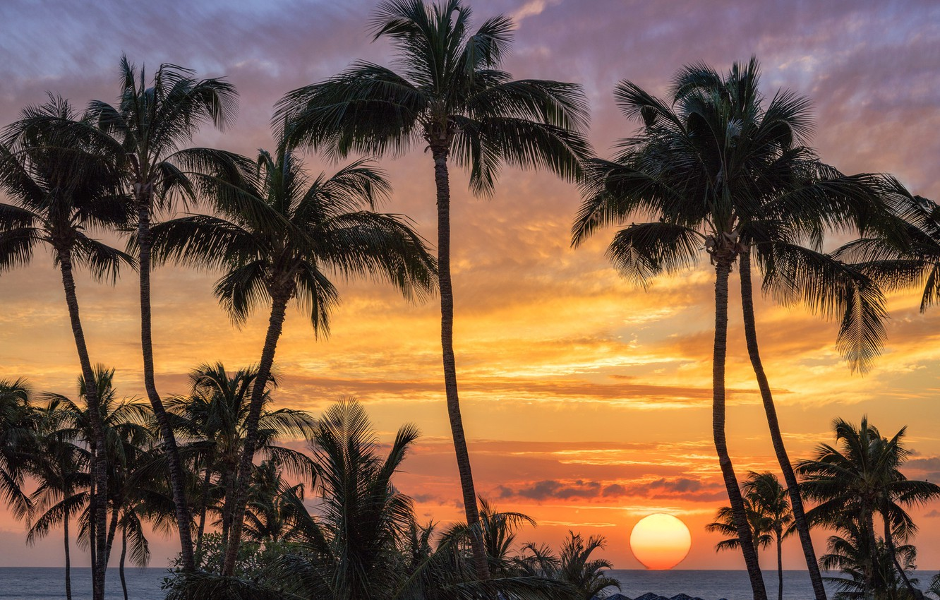 Photo Wallpaper Sea, Sunset, Palm Trees, The Sun, Silhouette, - Landscape Sunset With Palm Trees Hawaii - HD Wallpaper