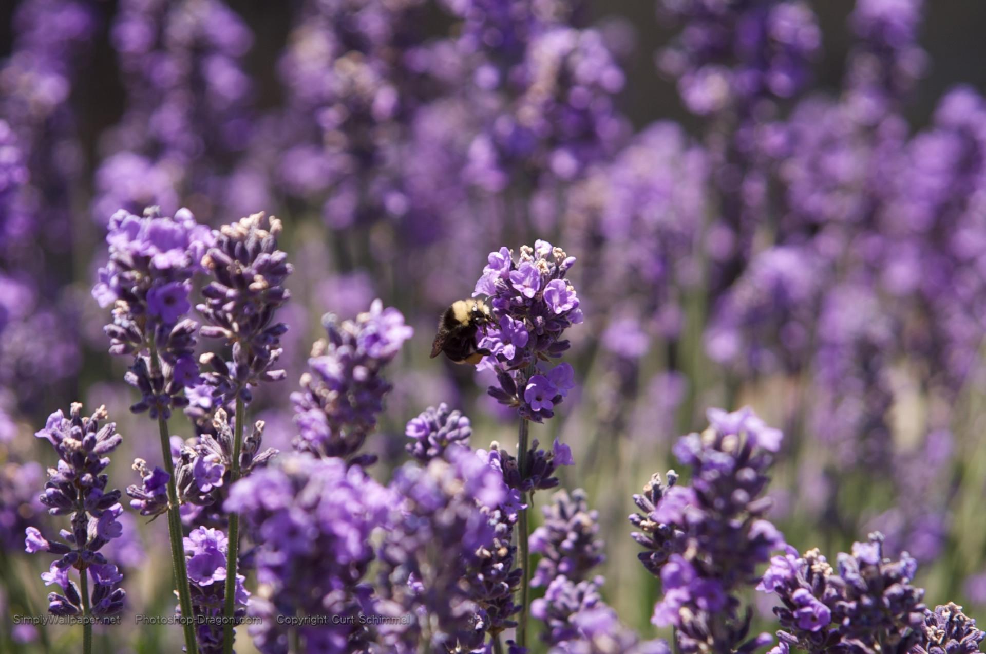 164 1643266 purple flower desktop background