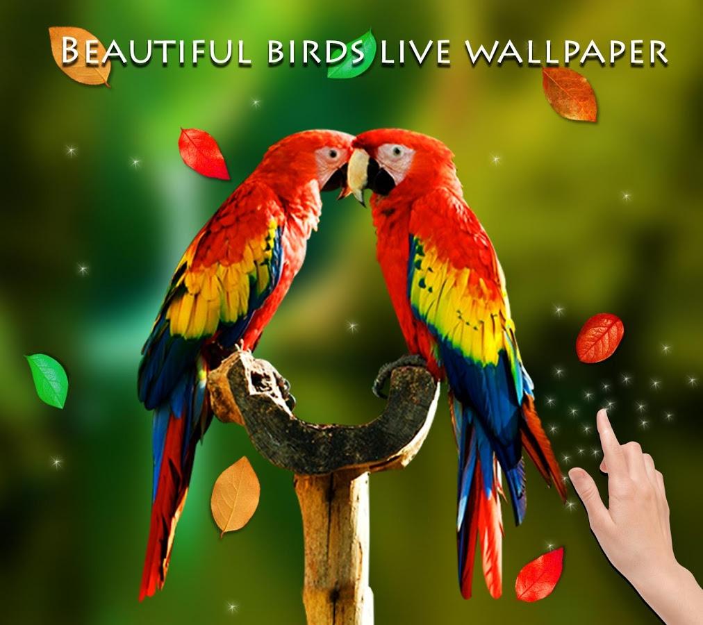 Pixel 3d Birds Birds Live Wallpaper Download 1012x900 Wallpaper Teahub Io