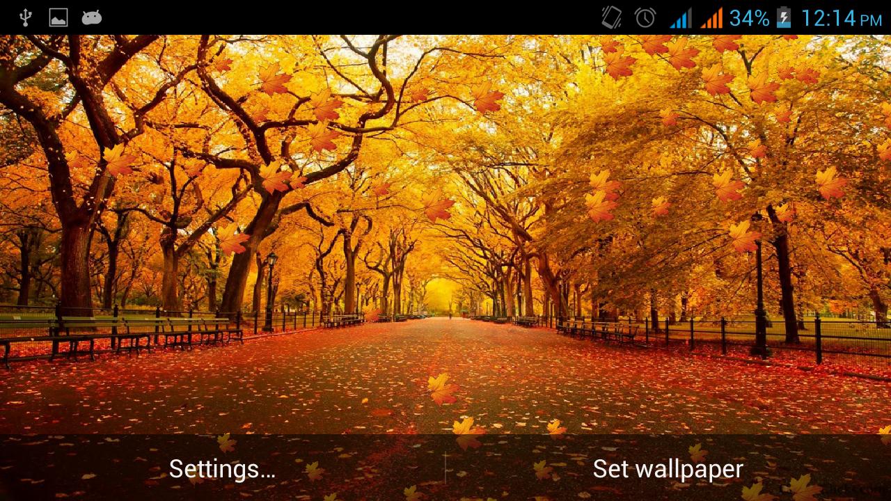 New York Central Park Autumn - HD Wallpaper