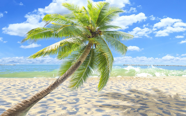 Iphone X Palm Tree Wallpaper Sunny - HD Wallpaper