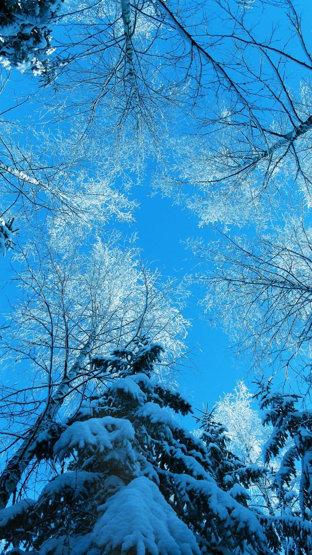 Winter 5k 4k Wallpaper Forest Fir Tree Snow Winter 4k Portrait Wallpaper Nature 640x1138 Wallpaper Teahub Io