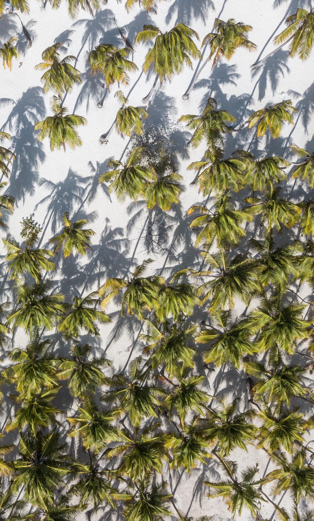 Iphone 7 Plus Wallpaper Palm Tree - HD Wallpaper