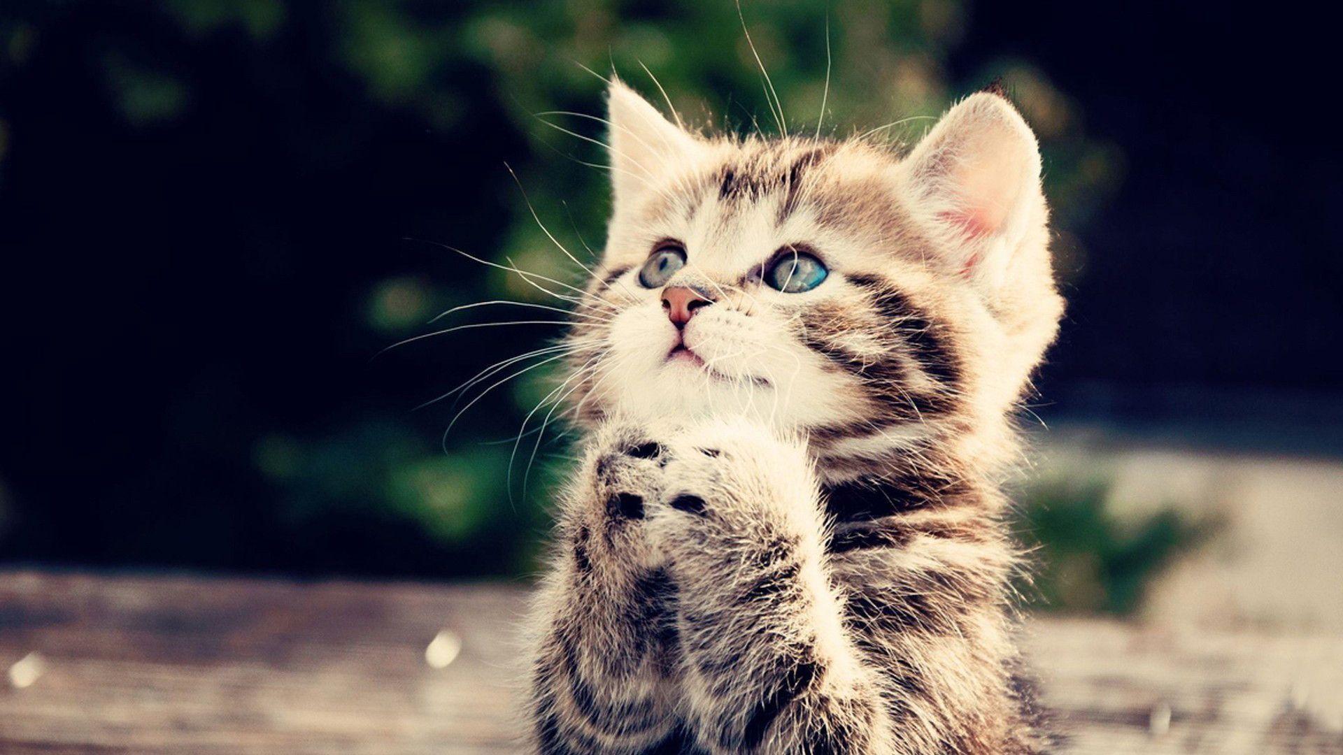 Cute Kitten Wallpaper - Cute Animals Hd - HD Wallpaper
