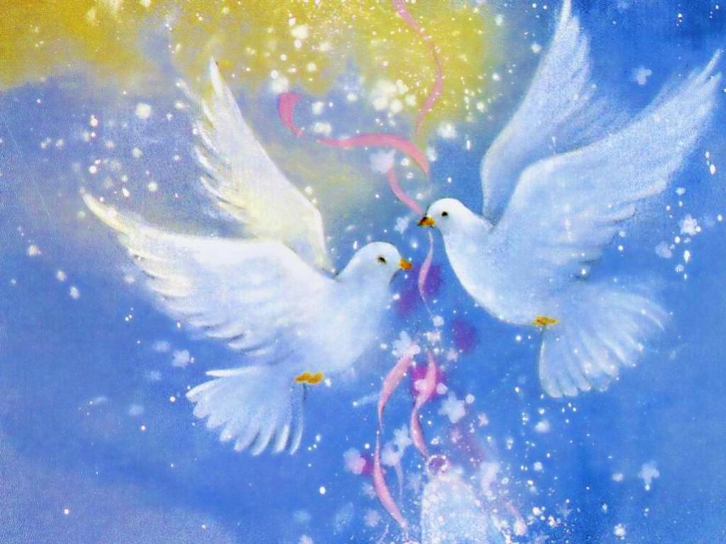 Love Birds Love Birds Photos Download 1024x768 Wallpaper Teahub Io