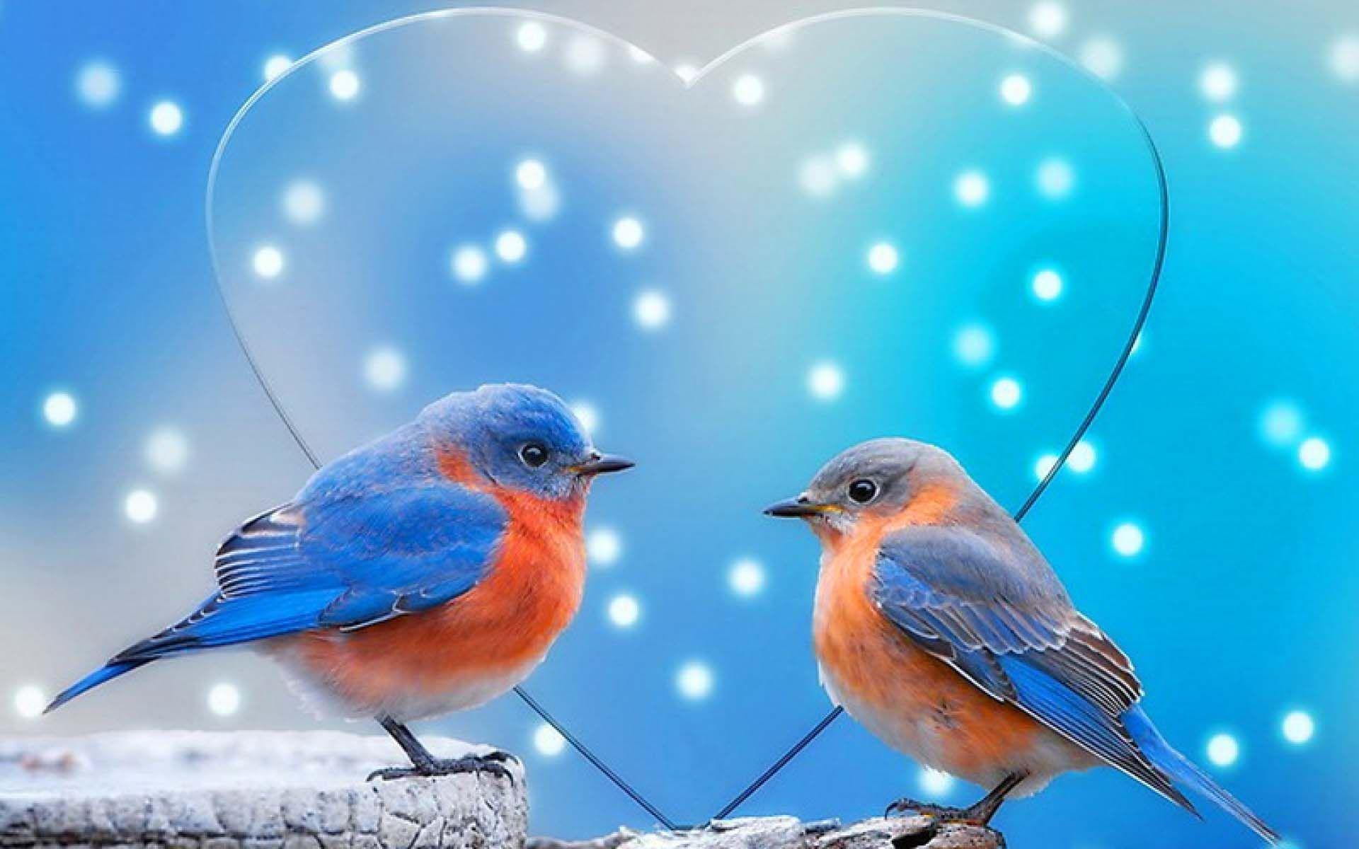 Sparrow Love Birds Image 051 Wallpaper - Love Birds Wallpapers For Mobile - HD Wallpaper