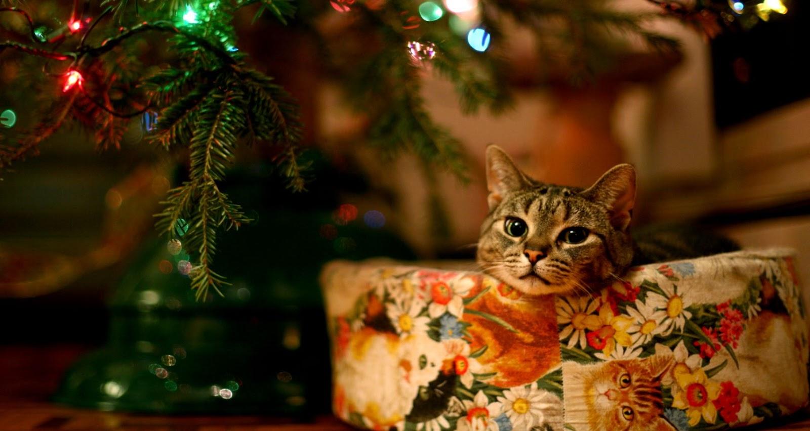 Cat Under Christmas Tree Hd Cat Wallpapers Kittens ...
