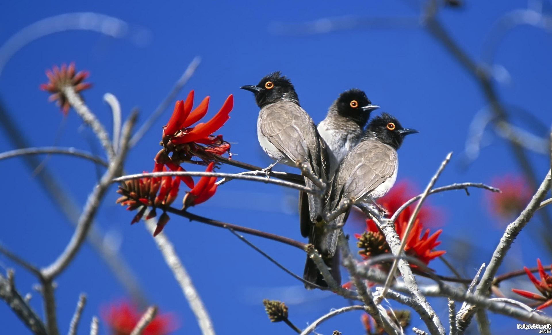 Nature Love Birds Wallpaper Hd 14 Widescreen Birds - 1080p Birds Wallpaper Hd - HD Wallpaper