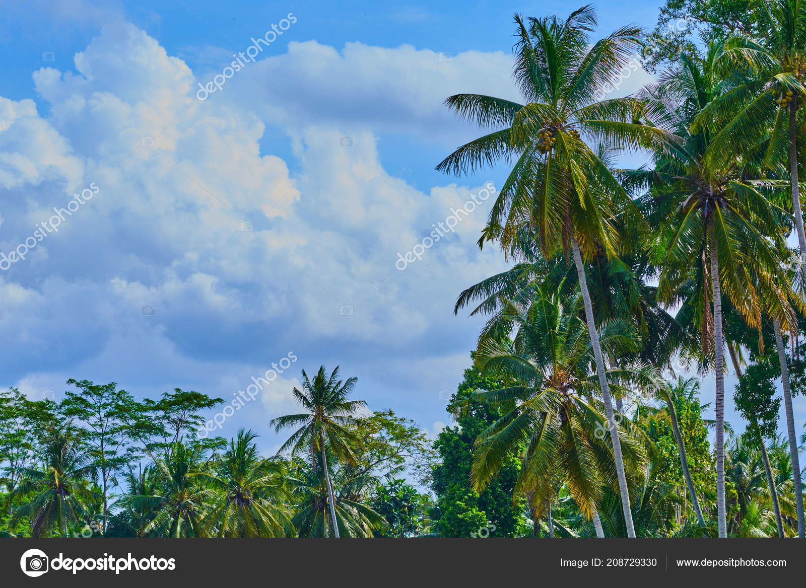 Palm Trees Clouds Background - HD Wallpaper