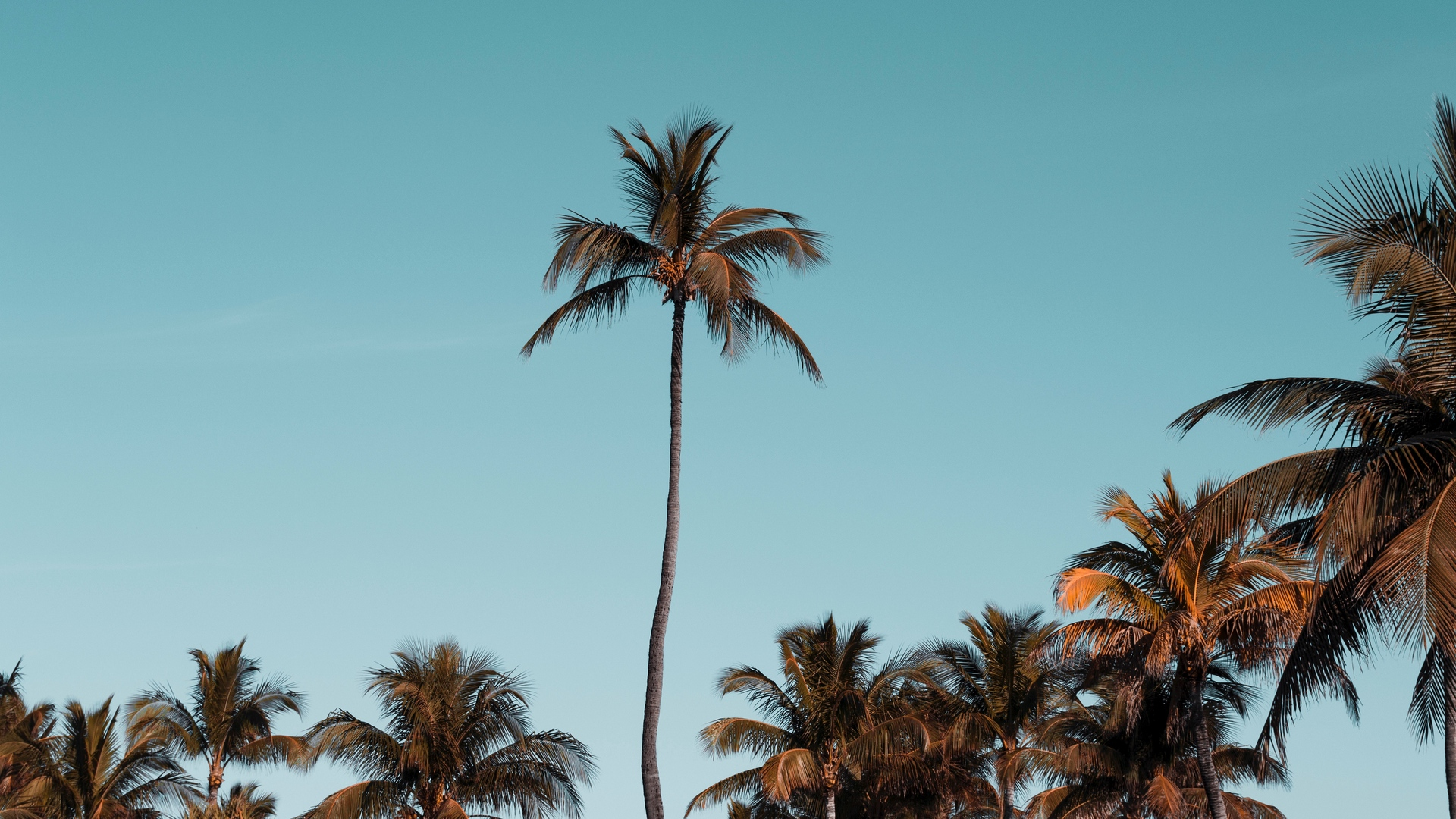 Wallpaper Palm Trees, Trees, Crowns, Sky, Tropical - Palm Trees - HD Wallpaper
