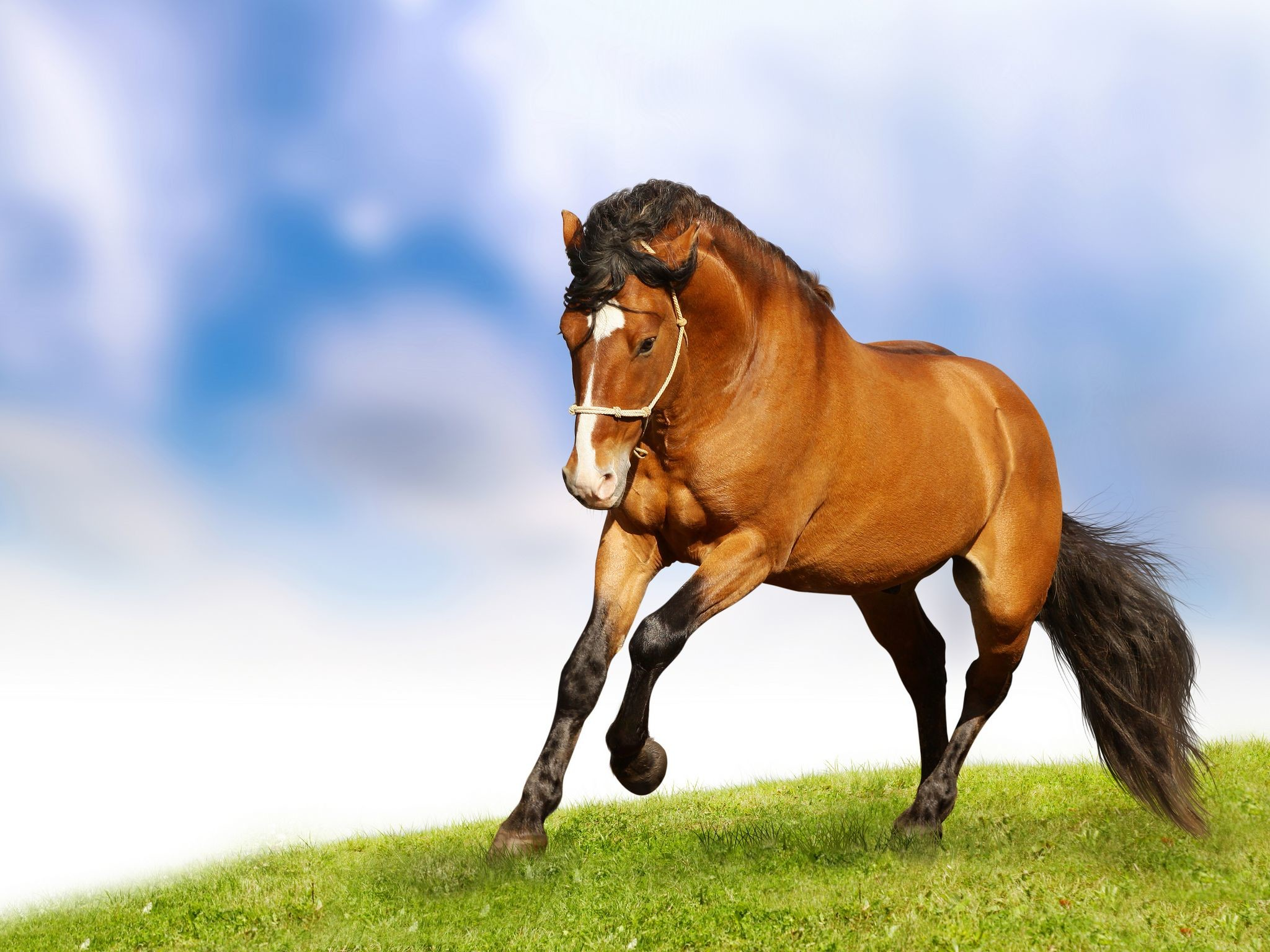 Horse Wallpaper Iphone Horse Hd Images Free Download 2048x1536 Wallpaper Teahub Io