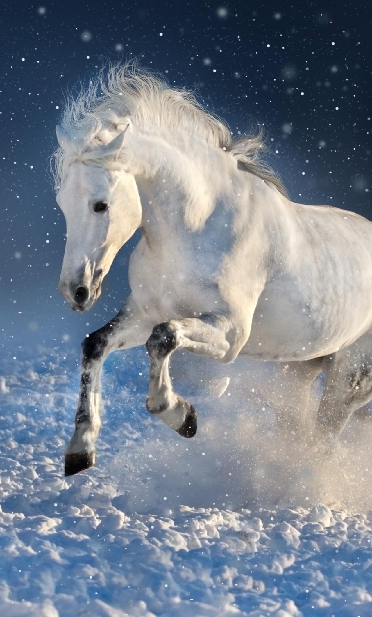 White Horse Run Mammal Portrait Wallpaper Iphone 7 Horse Wallpaper Iphone 1280x2120 Wallpaper Teahub Io