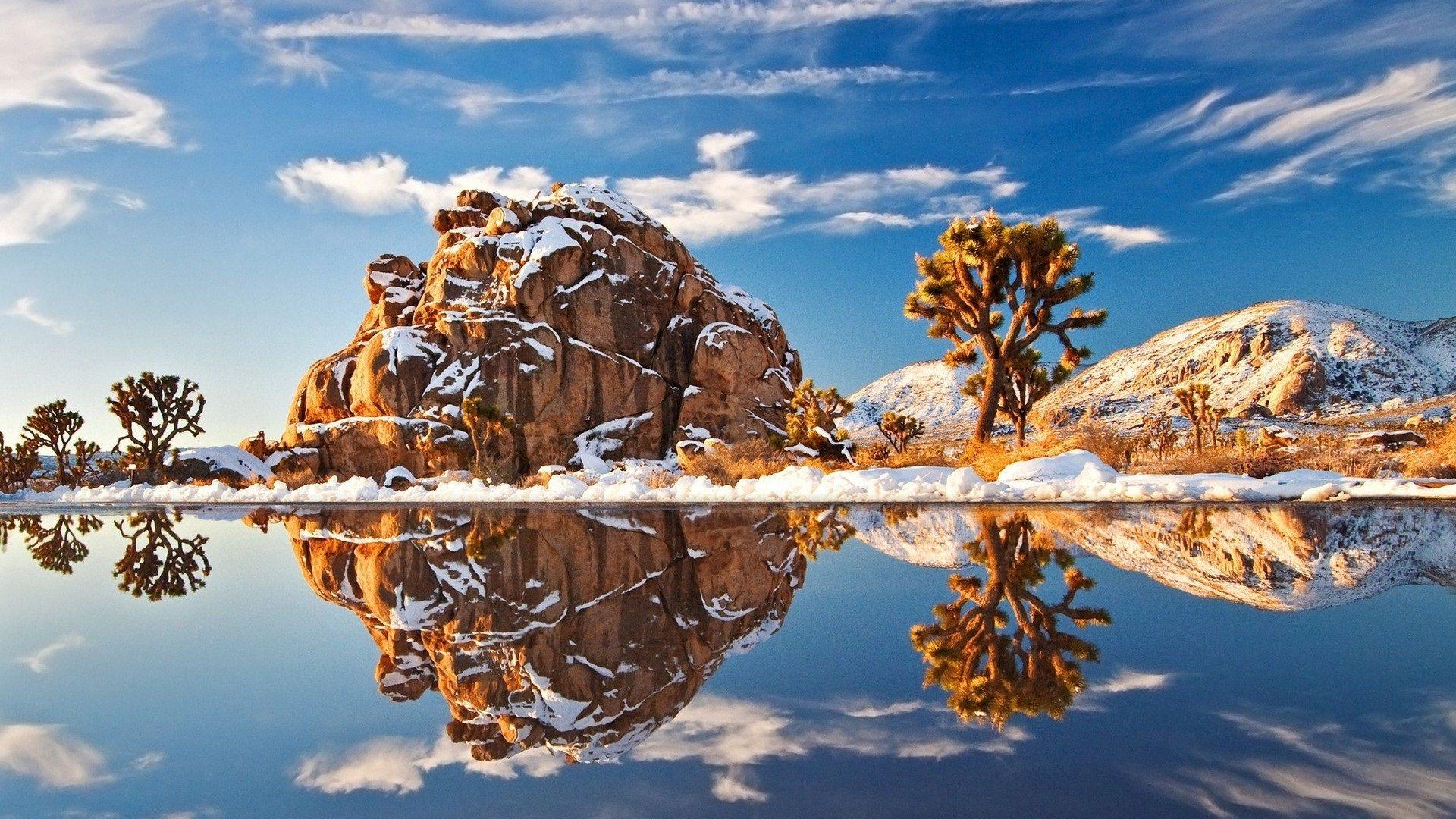 Snow Joshua Tree Wallpaper Hd 1920x1080 Wallpaper Teahub Io