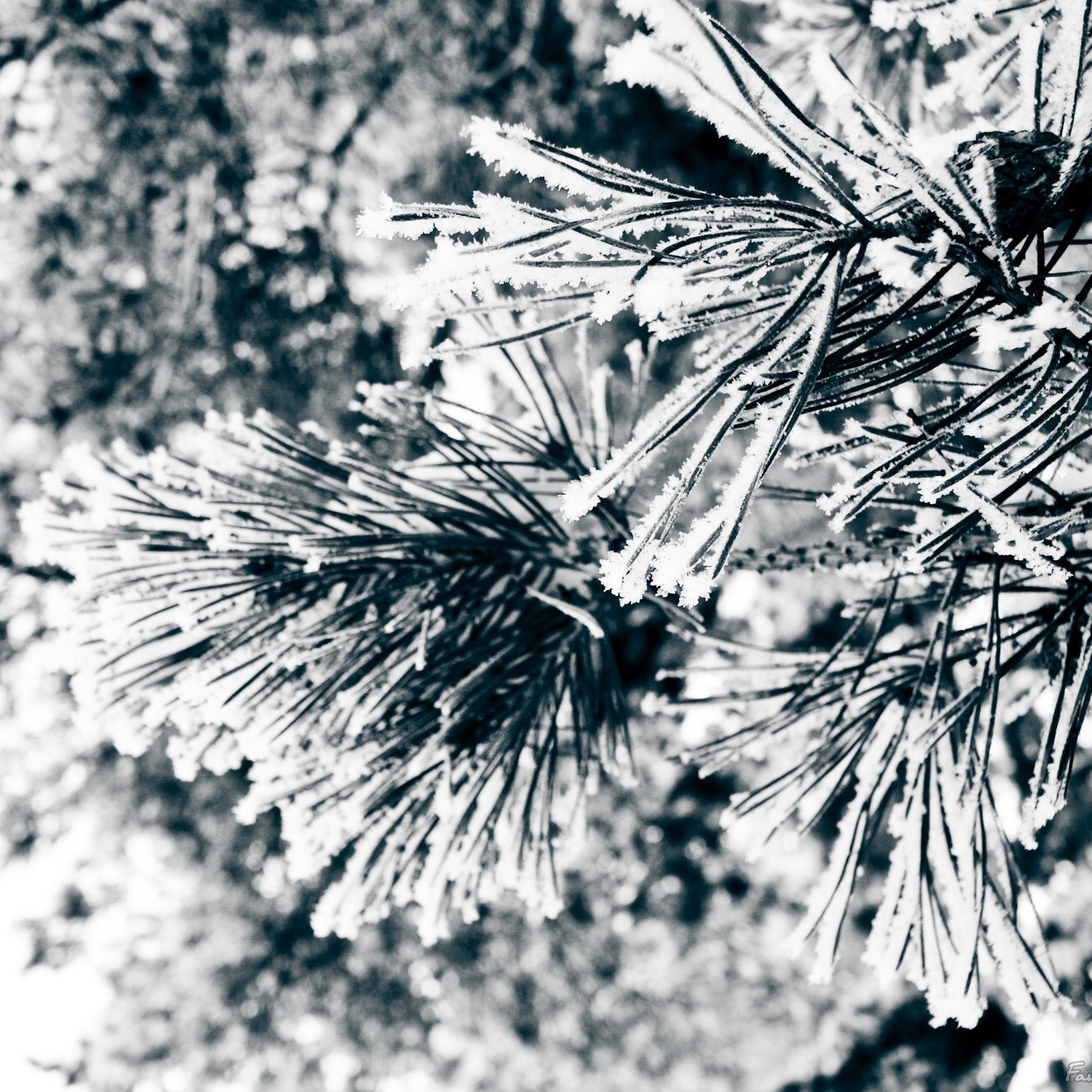 Iphone Wallpaper Snow Trees - HD Wallpaper