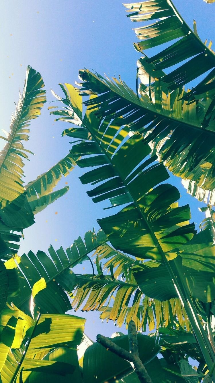 Palm Leaves Wallpaper Iphone 750x1333 Wallpaper Teahub Io Join now to share and explore tons of collections of awesome wallpapers. palm leaves wallpaper iphone 750x1333