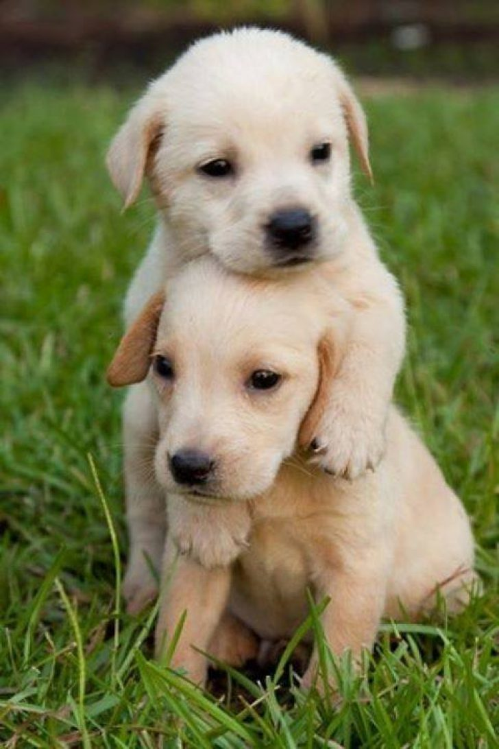 Permalink To Puppy Wallpapers Cute Puppy Wallpaper For Mobile 728x1092 Wallpaper Teahub Io