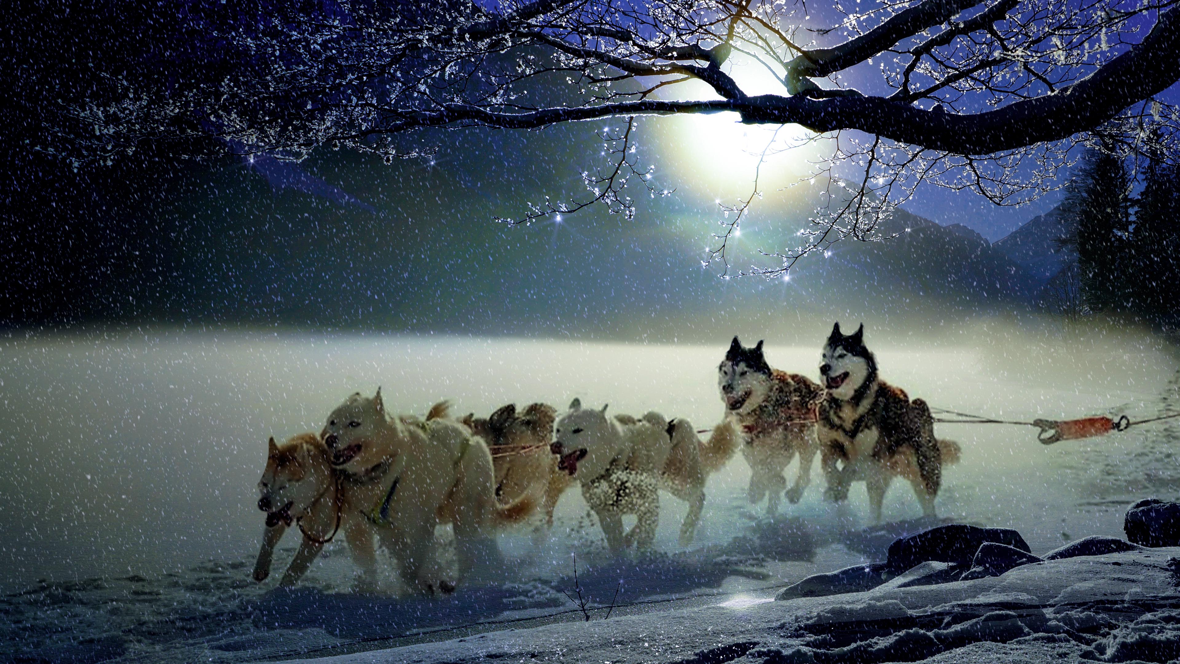 Dogs Wallpaper For Laptop 3840x2160 Wallpaper Teahub Io