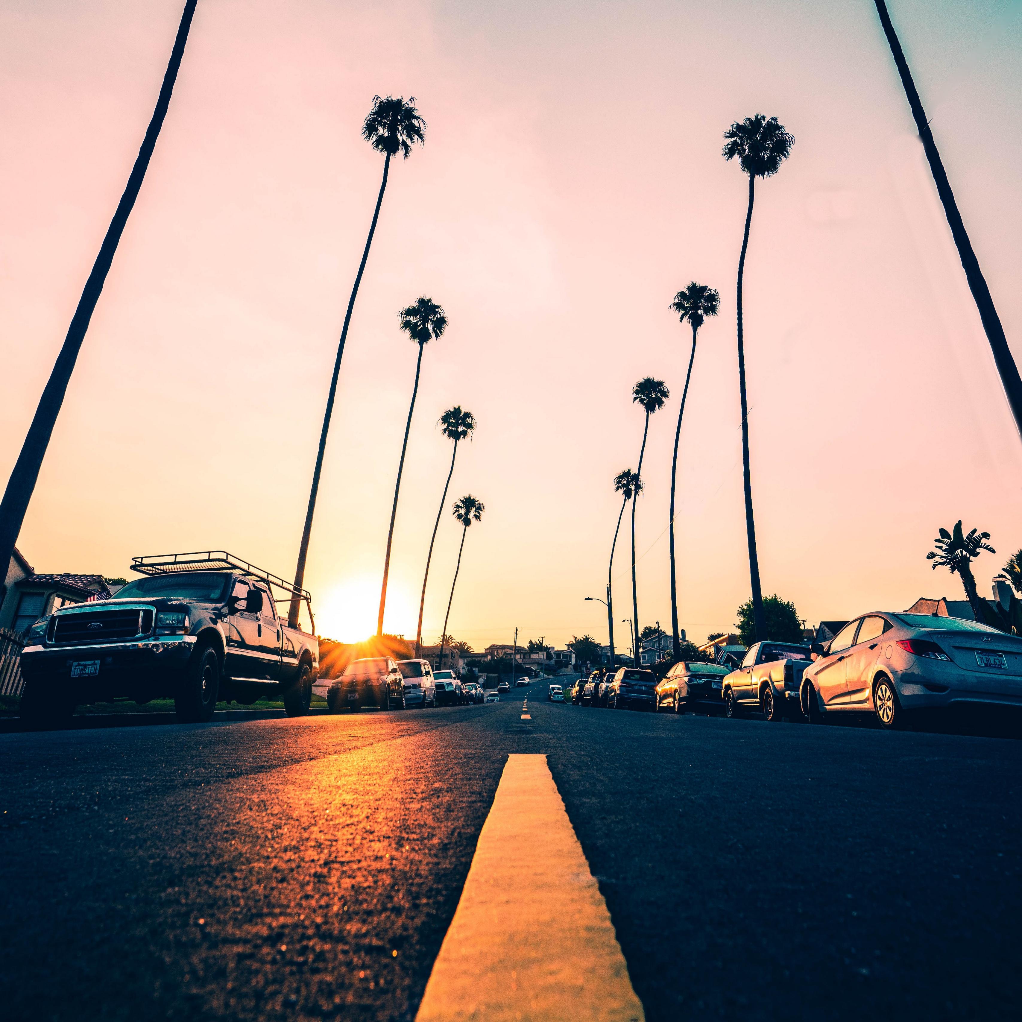 Wallpaper Road, Palm Trees, Asphalt, Cars, Marking, - California Palm Trees Iphone - HD Wallpaper