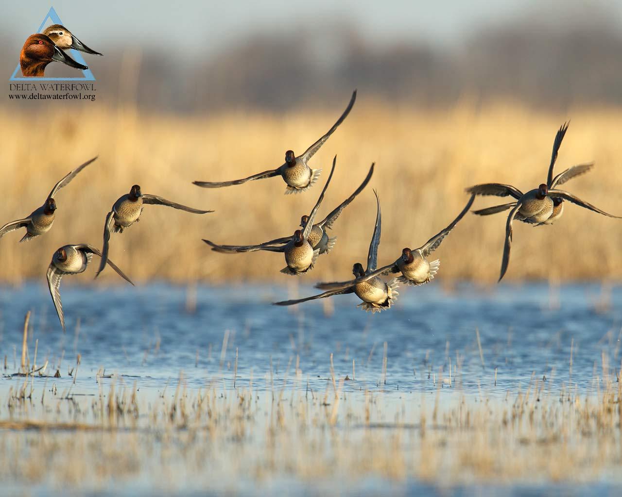 Bow Hunting Wallpaper - Duck Hunting Wallpaper Hd - HD Wallpaper