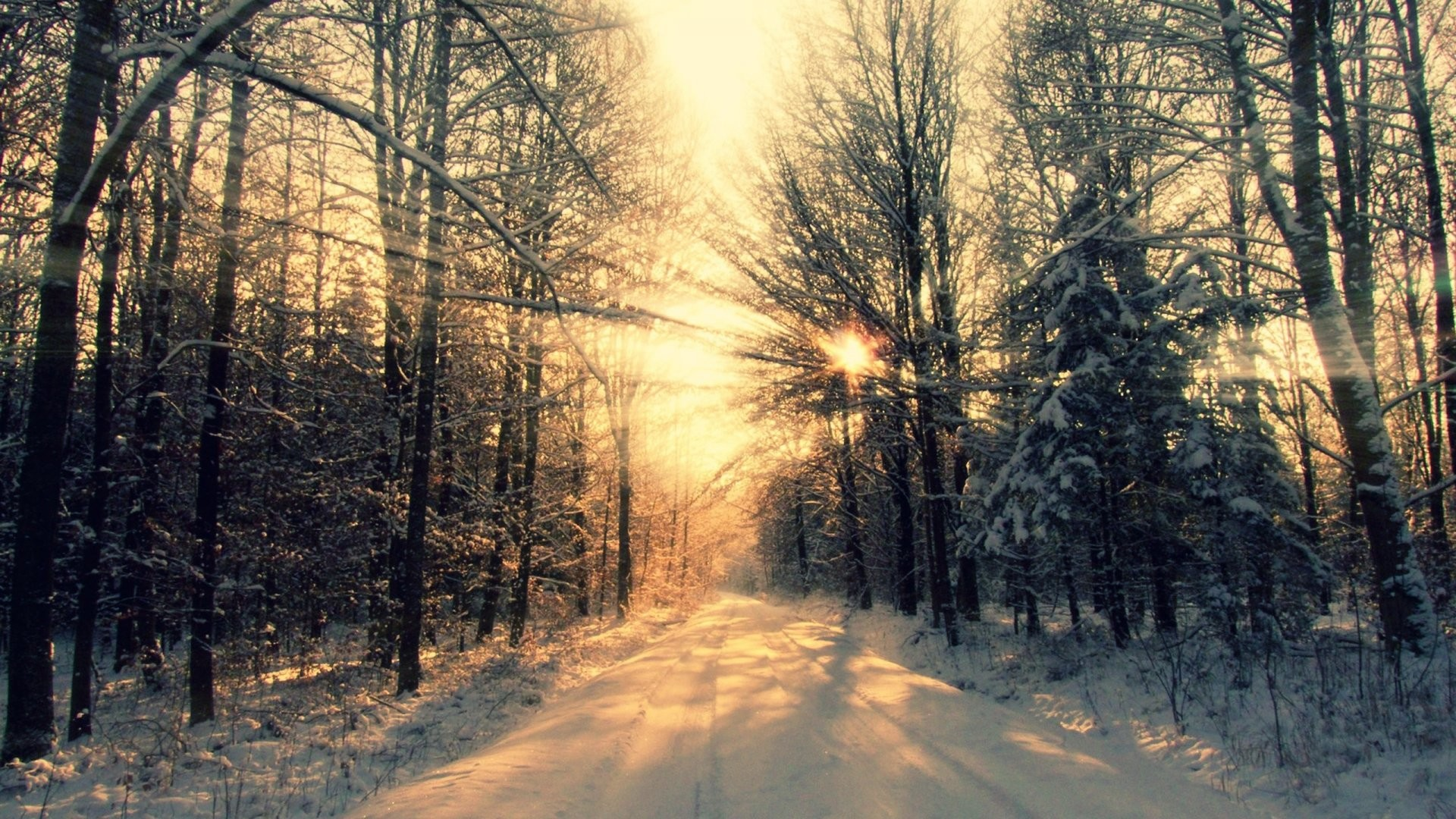 Wallpaper Winter Forest K K Wallpaper Mountain Sun - Winter Desktop Backgrounds - HD Wallpaper