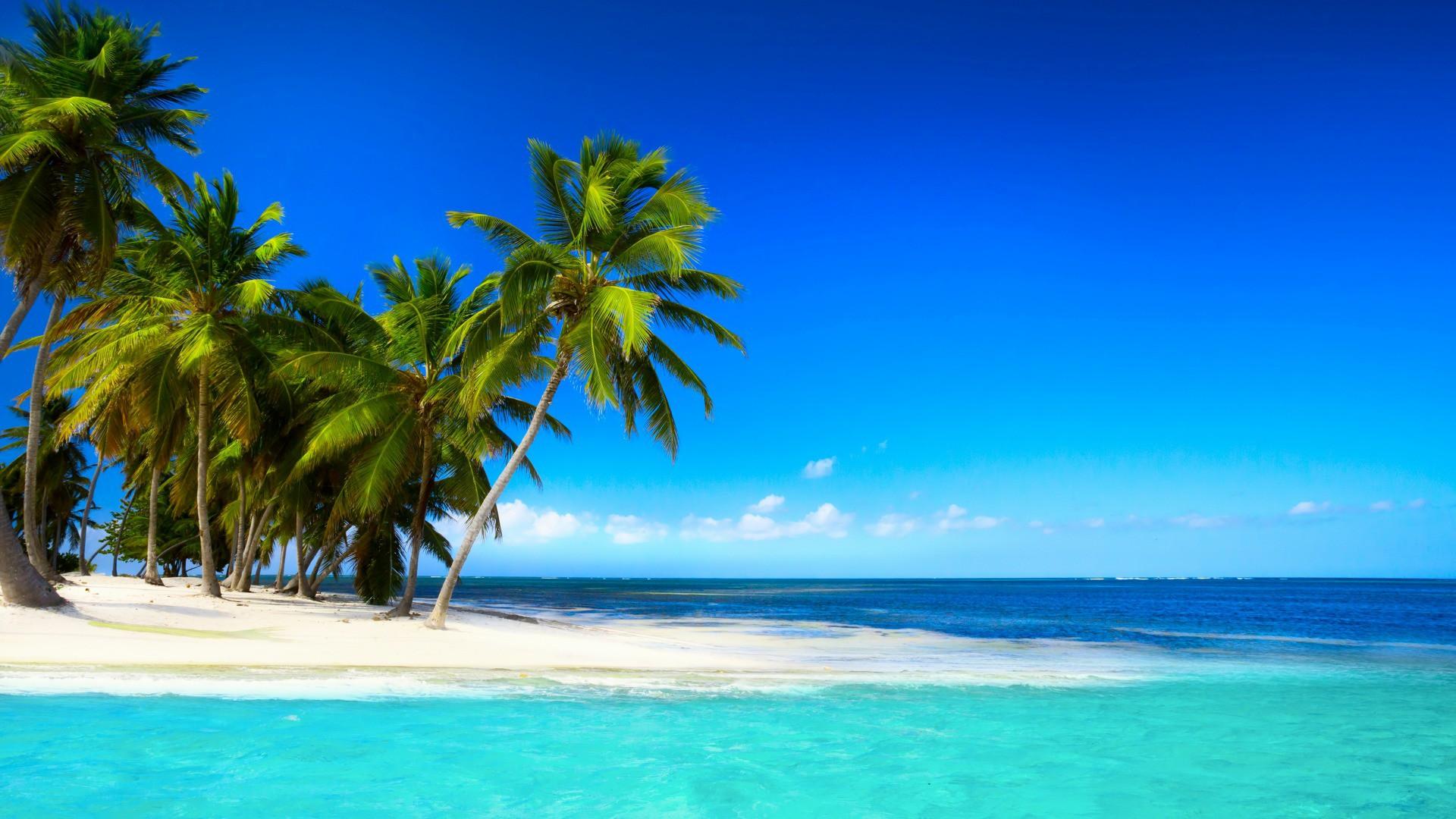 Tropical Beach With Palm Trees Beautiful Sky Blue Sea - Tropical Beaches With Palm Trees - HD Wallpaper