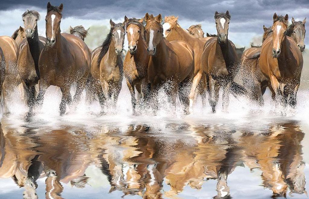 Free Wild Horse Desktop Wallpapers Beautiful Running Wild Horses 1024x661 Wallpaper Teahub Io