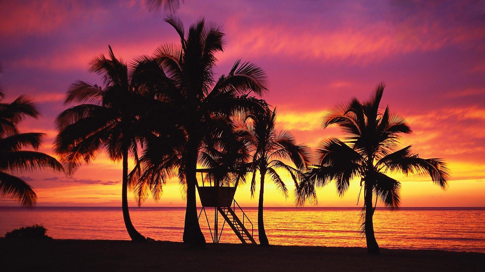 Hawaiian Beach Wallpapers Wallpaper - Palm Trees - HD Wallpaper