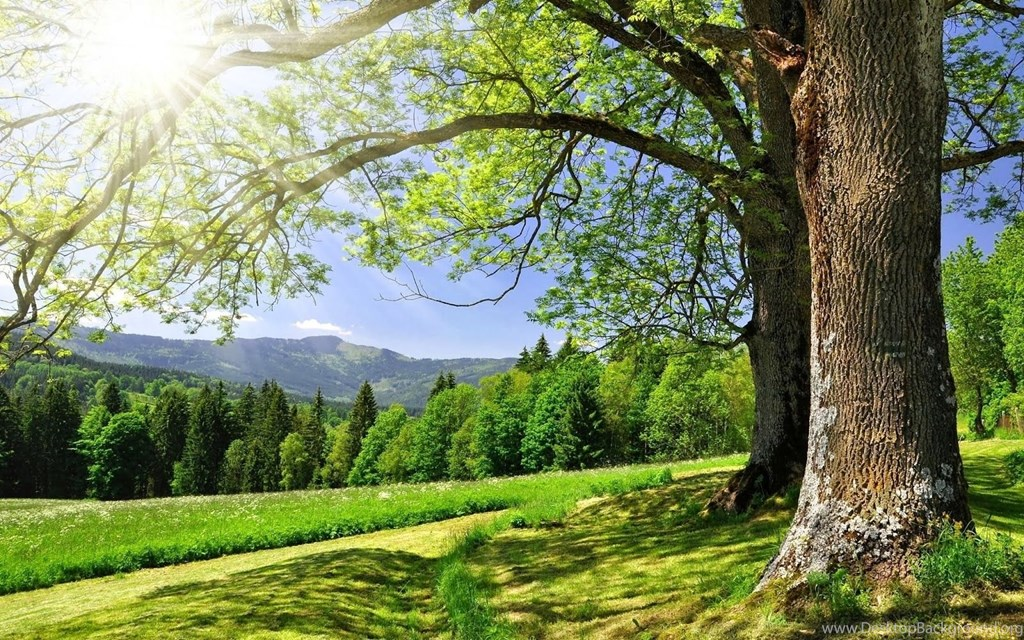World Most Beautiful Nature Wallpaper » Picserio - Nature Wallpaper For Pc - HD Wallpaper