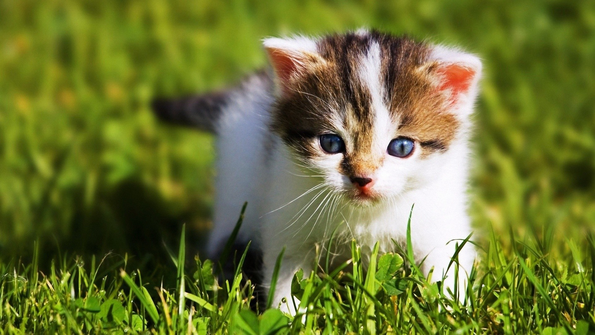 11 Cute Baby Animals That Will Get Rid Of Your Stress - Beautiful Animal Wallpaper Hd - HD Wallpaper