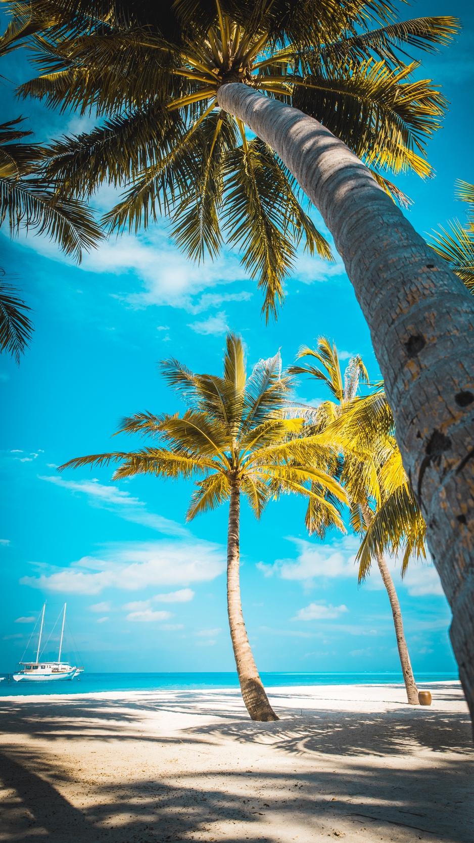 Wallpaper Palm Trees, Beach, Sand, Tropics, Paradise - Iphone Palm Tree Beach Background - HD Wallpaper