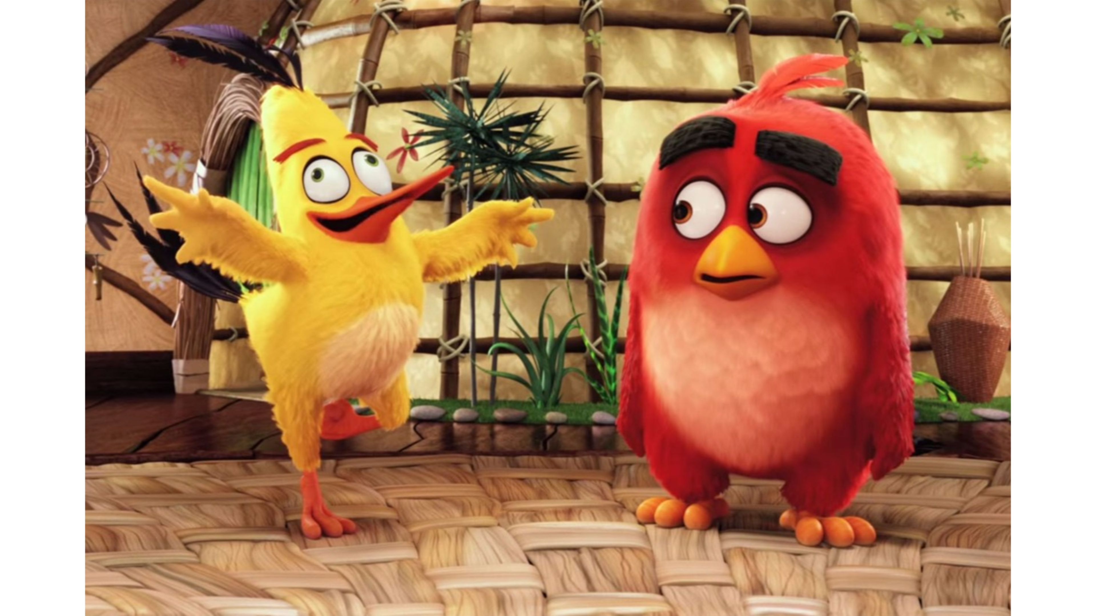Funny Images Of Angry Birds 3840x2160 Wallpaper Teahub Io