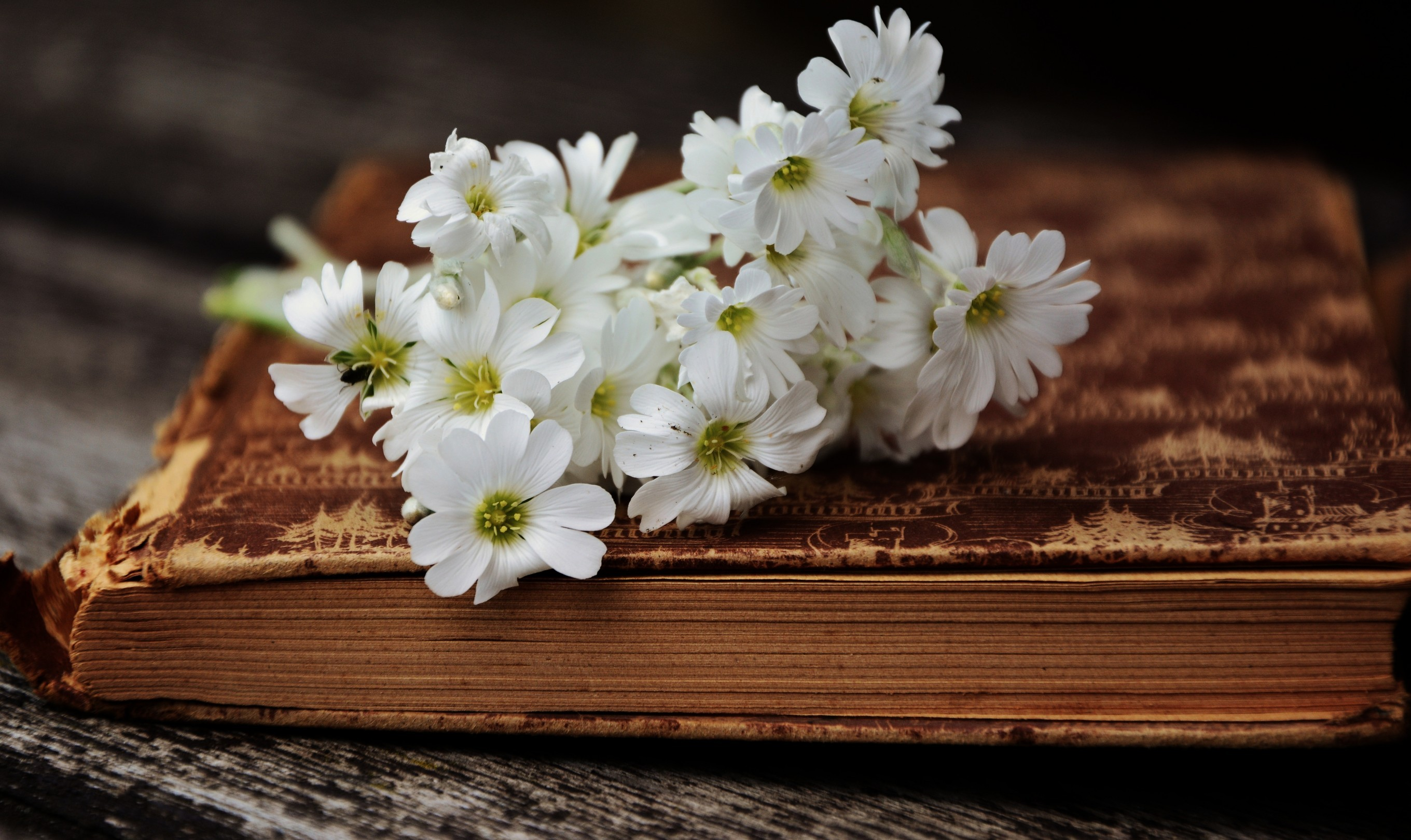 White Flowers, Old Book - Photography Vintage Wallpaper Hd - HD Wallpaper