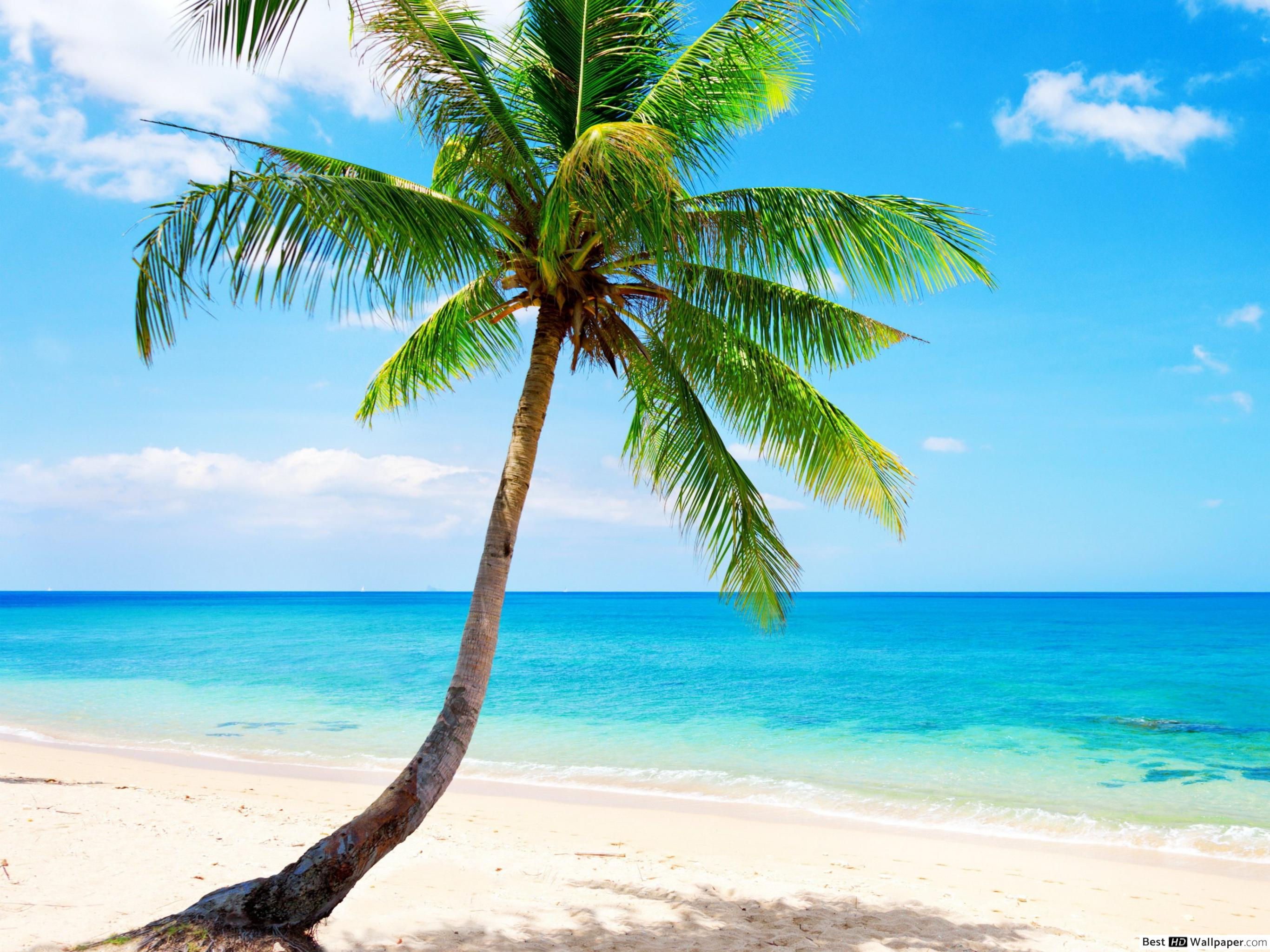 Tropical Beach With Palm Tree - HD Wallpaper