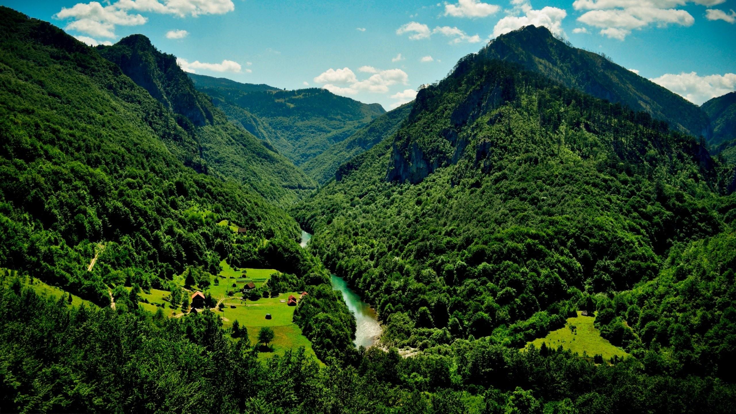 4k Ultra Hd Nature Wallpaper 2560x1440, - Green Forest Landscape - HD Wallpaper