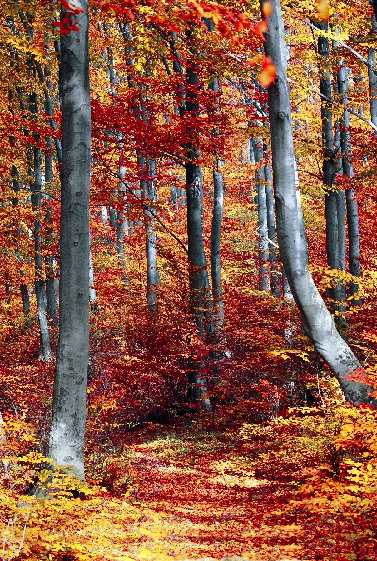 Get Wallpaper Fall Forest Images
