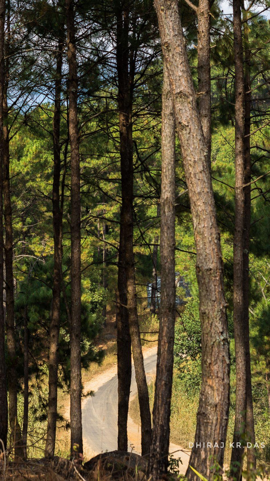 Trees Forest Road Meghalaya 4k Ultra Hd Mobile Wallpaper - Ultra Hd Forest 4k - HD Wallpaper