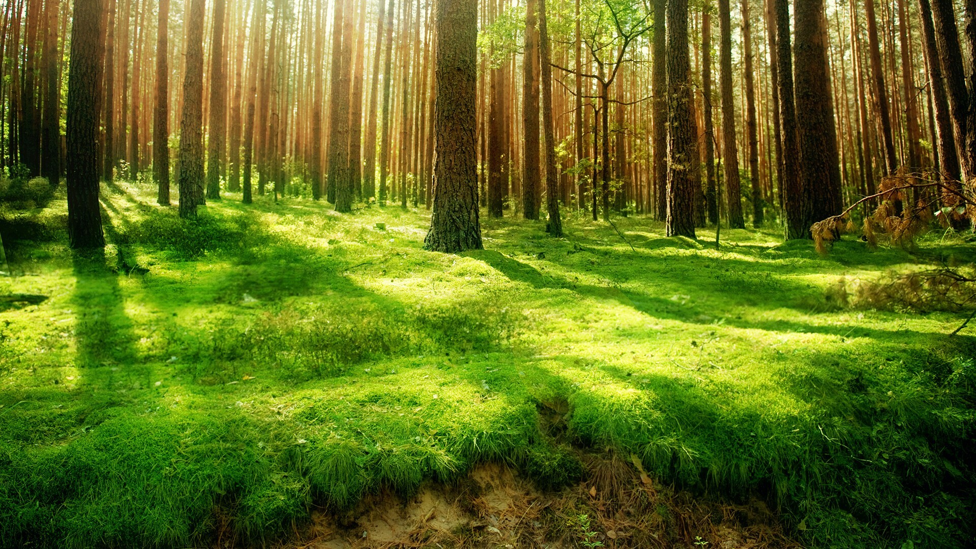 Tm 77 Forest Wallpaper Pictures Of Forest 4k Ultra - Forest Background - HD Wallpaper